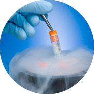 Embriyo Dondurma Kıbrıs